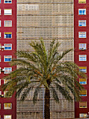 Apartment, Apartments, Architecture, Block, Blocks, Building, Buildings, cities, city, Color, Colour, Daytime, exterior, Flat, Flats, Height, outdoor, outdoors, outside, Palm, Palm tree, Palm trees, Palms, Scale, Symmetrical, Symmetry, Tall, D56-703860, a