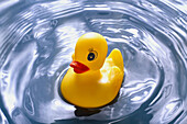 Bath, Bathing, Baths, Childhood, Close up, Close-up, Closeup, Color, Colour, Concept, Concepts, Detail, Details, Duck, Ducks, Float, Floating, Game, Games, Infancy, Mood, Object, Objects, One, One item, Play, Plays, Positive, Positive feeling, Positive fe