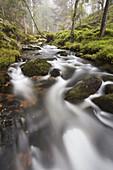 Highland stream - Allt Ruadh - running through pine forest  Cairngorms  Scotland  October 2006