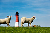 Sheep and Lighthouse, Pellworm Island, North Frisian Islands, Schleswig-Holstein, Germany