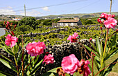 Viniculture on the southcoast, Terceira Island, Azores, Portugal