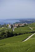 View over vineyards and Bougy-Villars to Lake Geneva, La Cote, Canton of Vaud, Switzerland