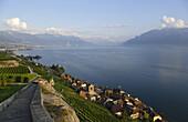 View over vineyards and Saint Saphorin to lake Geneva, Lavaux, Canton of Vaud, Switzerland