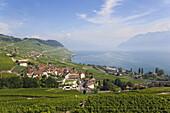 View towards lake Geneva, Lavaux, Canton of Vaud, Switzerland