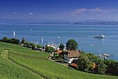 Blick auf Weinfeld am Seeufer und den Bodensee, Baden-Württemberg, Deutschland