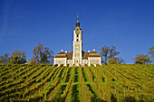 Vineyard with pilgrimage church Birnau, Unteruhldingen, Baden Wurttemberg, Germany