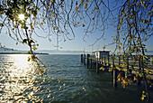 Bootssteg am Seeufer im Sonnenlicht, Bodensee, Bayern, Deutschland