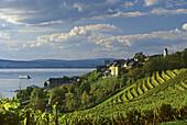 Blick über Weinberg auf die Häuser von Meersburg, Bodensee, Baden-Württemberg, Deutschland