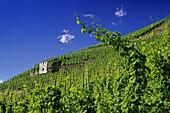 Sonnenuhr in einem Weinberg, Zeltingen-Rachtig, Rheinland-Pfalz, Deutschland