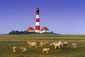 sheep in front of Westerhever lighthouse, Eiderstedt peninsula, North Friesland, Schleswig-Holstein, Germany