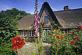 Typical house with thatched roof and flower garden at Keitum, Sylt island, North Friesland, Schleswig-Holstein, Germany