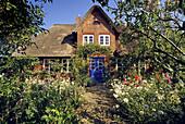 Typical thatched house with flower garden at Nebel, Amrum island, North Friesland, Schleswig-Holstein, Germany