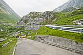 Kühe auf der Landstraße, Berglandschaft, St. Gotthard, Schweiz
