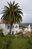 Town of Obidos with palm tree, Obidos, Leiria, Estremadura, Portugal