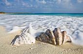 Shells at Bikini Beach, Marshall Islands, Bikini Atoll, Micronesia, Pacific Ocean