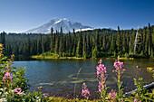The idyllic Reflection Lake with Mount Rainier under blue sky, Mount Rainier Nationalpark, Washington, USA
