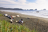 Family at vast Shi Shi Beach at Olympic Peninsula, Washington, USA