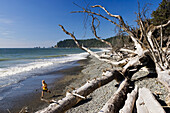 Driftwood on the beach in the sunlight, Olympic Nationalpark, Washington, USA