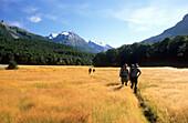 Trekkers on the Rees Dart Track the idyllic Dart Valley, Mt. Aspiring National Park, South Island, New Zealand, Oceania