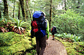 Trekker hiking on the Kepler Track crossing thick forests, Fiordland National Park, South Island, New Zealand, Oceania