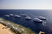 Diving Liveaboards at Reef, Brother Islands, Red Sea, Egypt
