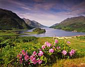 Loch Shiel and Glenfinnan Monument. Highlands, Scotland, UK