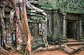 Ta Prohm bas reliefs, and giant tree roots Angkor Cambodia