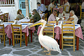 Petros the famous pelican distracts visitors to the shops and restaurants in Little Venice in Hora on the Greek Island of Mykonos, Greece.