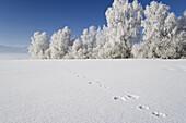 Tracks in snow, Upper Bavaria, Germany