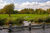 Idyllic scenery with geese and the river Vecht under cloudy sky, Netherlands, Europe