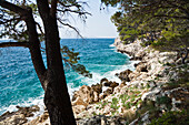 Ocean and rocky coast in the sunlight, Dalmatia, Croatia, Europe