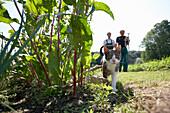 Cat near wild tobacco, biological dynamic (bio-dynamic) farming, Demeter, Lower Saxony, Germany