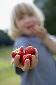 Boy holding fresh strawberries, biological dynamic (bio-dynamic) farming, Demeter, Lower Saxony, Germany
