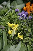 Freshly wild herbs, biological dynamic (bio-dynamic) farming, Demeter, Lower Saxony, Germany