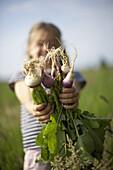 Girl (7 years) holding radishes, biological dynamic (bio-dynamic) farming, Lower Saxony, Germany
