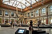 Museum für Naturkunde, Berlin Museum of Natural History