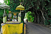Shrine with figures next to giant banyan tree with tunnel, West Bali, Indonesia, Asia