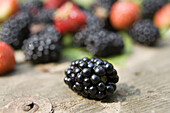 Berries, Berry, Blackberries, Blackberry, Botany, Color, Colour, Daytime, Detail, Details, Exterior, Food, Foodstuff, Fruit, Fruits, Horizontal, Nature, Nourishment, Outdoor, Outdoors, Outside, Plant, Plants, Selective focus, Still life, Sweet, Vegetation
