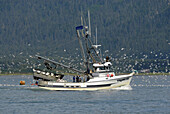 Commercial Fishing Boats surrounded by seagulls in Seward Alaska AK U S United States Kenai Peninsula Resurrection Bay charter commercial fishermen seagulls