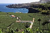 Aerial view, Aerial views, Agriculture, Atlantic Ocean, Banana tree, Banana trees, Canarias, Canaries, Canary Islands, Coast, Coastal, Color, Colour, Country, Countryside, Crop, Crops, Cultivation, Daytime, Exterior, Farming, Fertile, Field, Fields, From