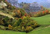 Passo di Mandrioli, Alpe di Serra, deciduous forest and pasture, colours of autumn, Apennine mountains, Emilia Romagna, Italy