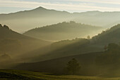 Pasture and  deciduous forest, lower mountain ranges, early morning  fog in autumn, Apennine mountains, Emilia Romagna, Italy