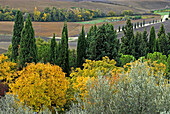 Val d`Orcia, Tuscan landscape, view from Pienza, cypresses, olive trees and deciduous trees, colours of autumn and ploughed up fields, Tuscany, Italy