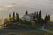 Val d`Orcia, farm, cypresses (Cupressus sempervirens), deciduous trees, fields, colours of autumn, morning mist, Tuscany, Italy