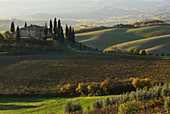Val d`Orcia, farm and cultivated landscape with fields, cypresses (Cupressus sempervirens) and deciduous trees, morning mist, autumn colours, Tuscany, Italy
