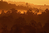 Daybreak with morning fog, tropical rainforest, view over canopy, Samboja-Lestari, Kalimantan, Borneo, Indonesia