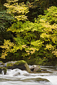 Salmon River in Autumn - Mt  Hood National Forest, Oregon