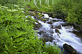 America, Aspen, Cascade, Color, Colorado, Colour, Flow, Green, Mountain, Rapid, River, Rockies, Rocky mountains, Spring, Stream, Summer, United states, Usa, Water, Waterfall, White water, S19-656850, agefotostock