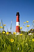 Lighthouse and flowers, Pellworm Island, North Frisian Islands, Schleswig-Holstein, Germany