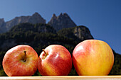 Three sunlit apples in front of mountains in the background, Sciliar, South Tyrol, Italy, Europe